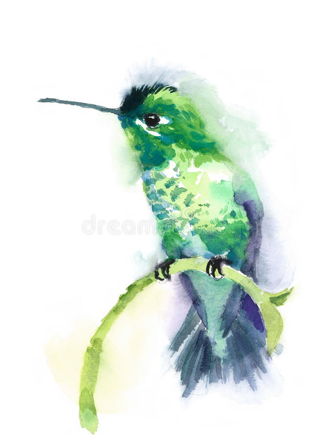 Green Hummingbird Watercolor Bird Illustration Hand Drawn. Hand drawn Watercolor illustration of Hummingbird sitting on the branch isolated on white background vector illustration