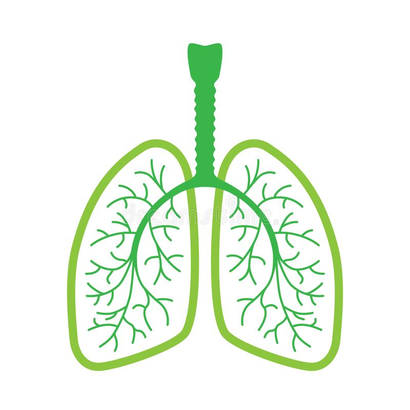 Human lungs  green icon royalty free illustration