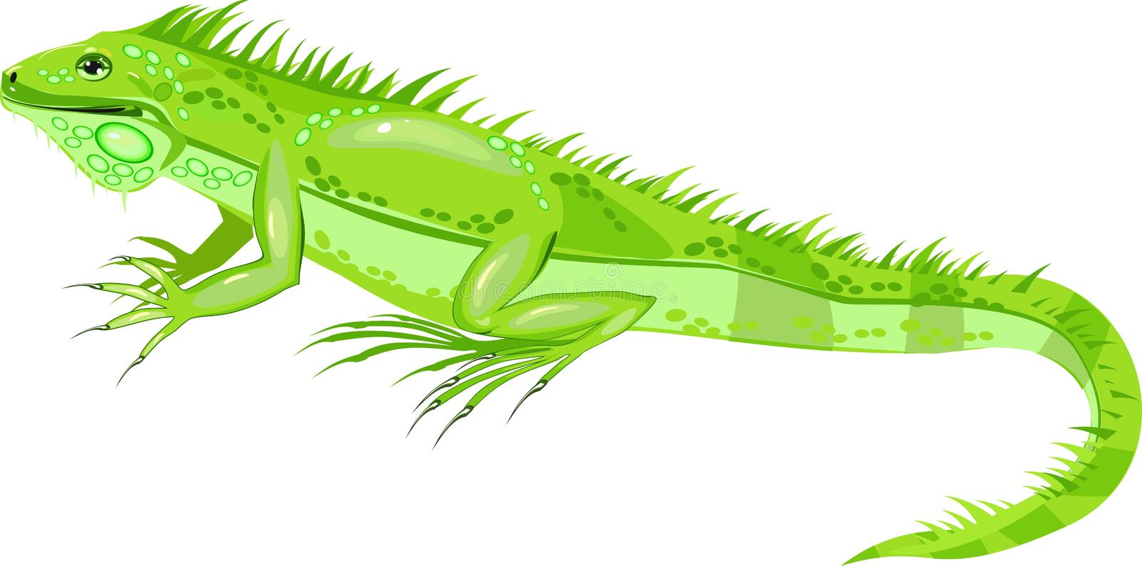 Green iguana. The green iguana or common iguana is a large lizard native to South America stock illustration