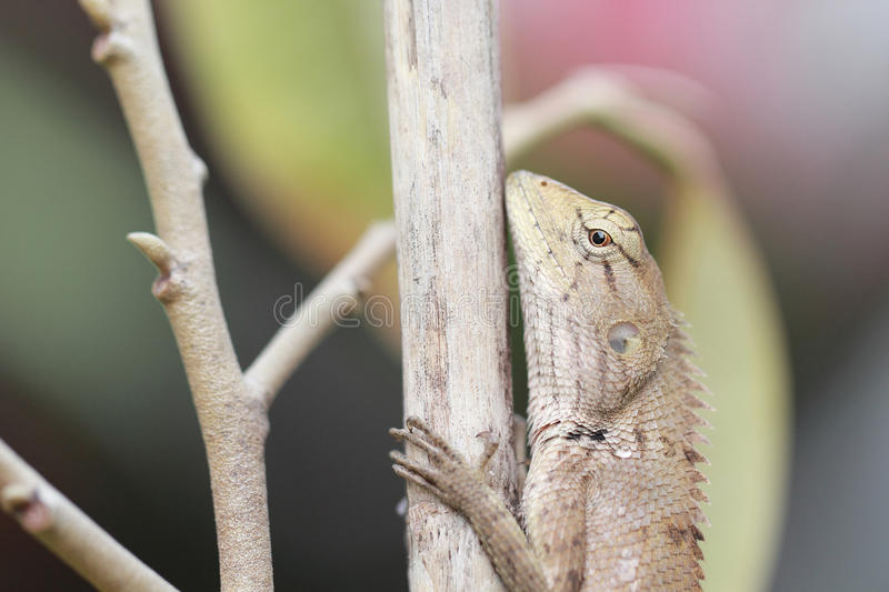 Green iguana resting on a branch. With background stock photography