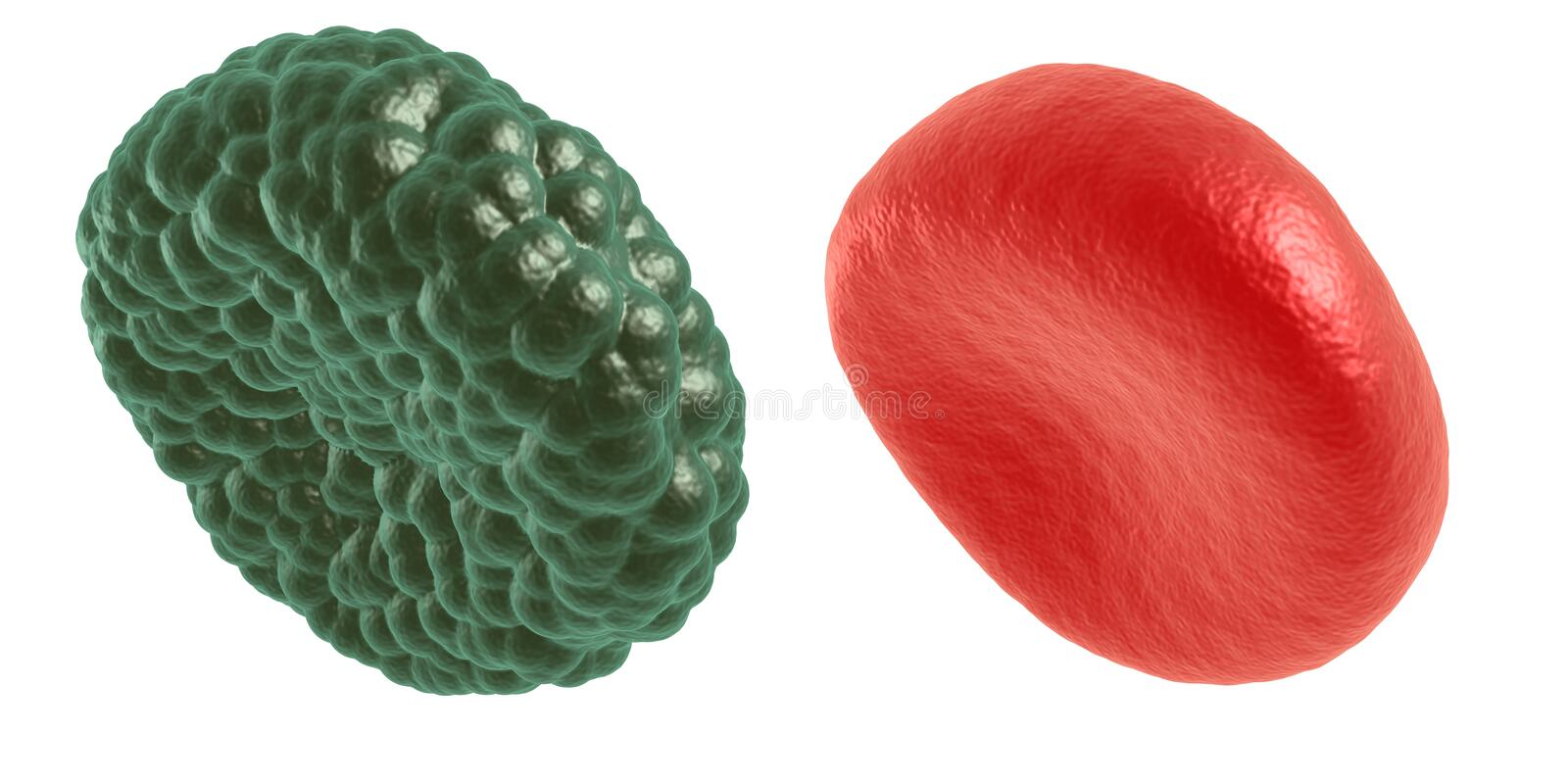 Download Green Illness And Red Blood Cell Stock Illustration - Illustration of medical, cell: 83736755
