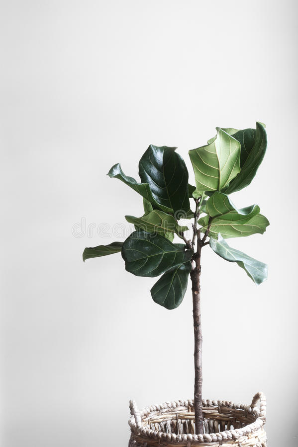 Green Indoor Plant in a Room stock images