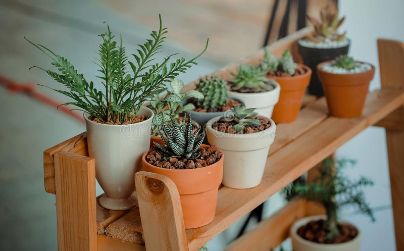 Green Indoor Potted Plant Lot royalty free stock photos