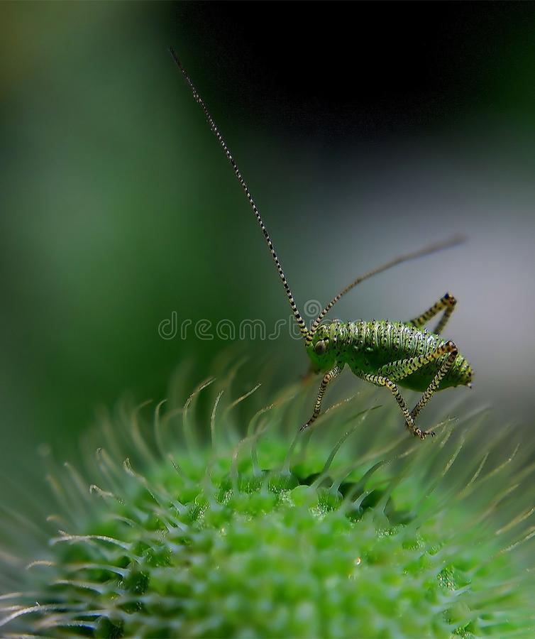 Green Insect Free Public Domain Cc0 Image