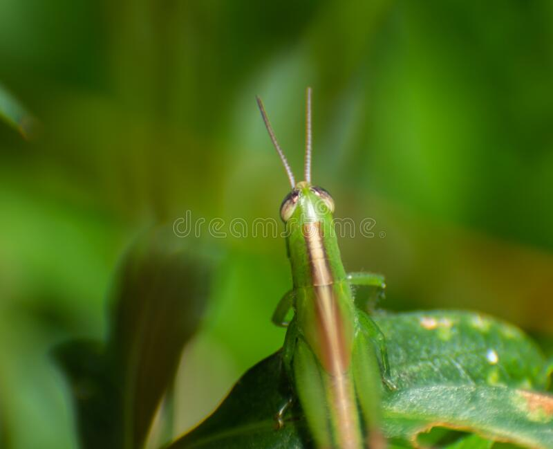 Green insect on a flower leaf by macro shot.  royalty free stock images