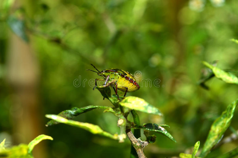 Green insect. Green nature cool tree insect macro bugs abstrac retro good elegan stock photos