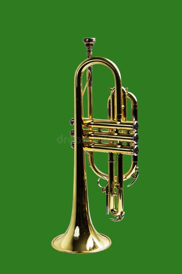 green isolerad trumpet arkivbilder