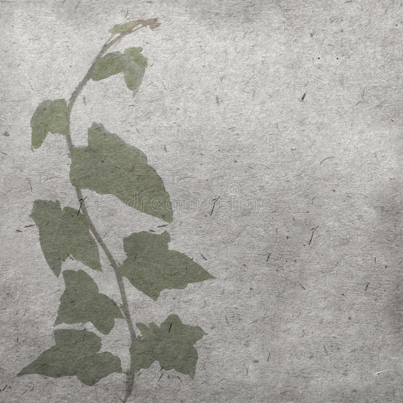 Green ivy on old grunge antique paper texture royalty free stock photography