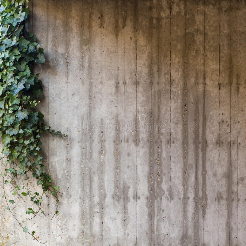 Free Green Ivy On Concrete Wall Stock Photography - 89280672
