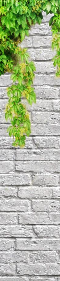 Green ivy on white brick wall, blank space for writing. royalty free stock photos