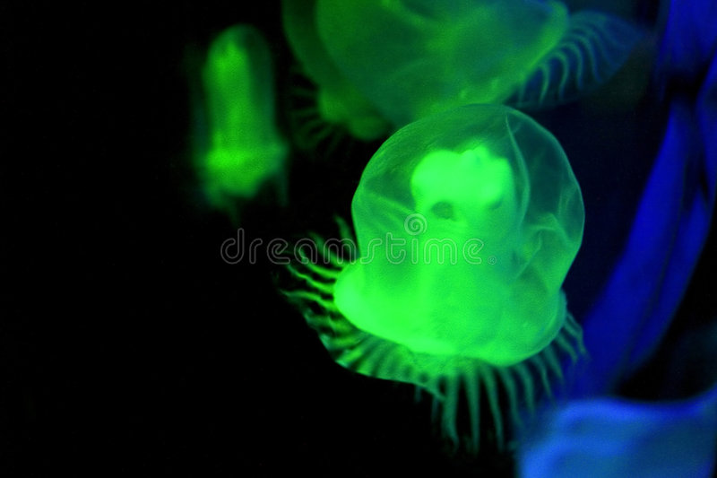 Download Green Jellyfish Royalty Free Stock Photos - Image: 2226458