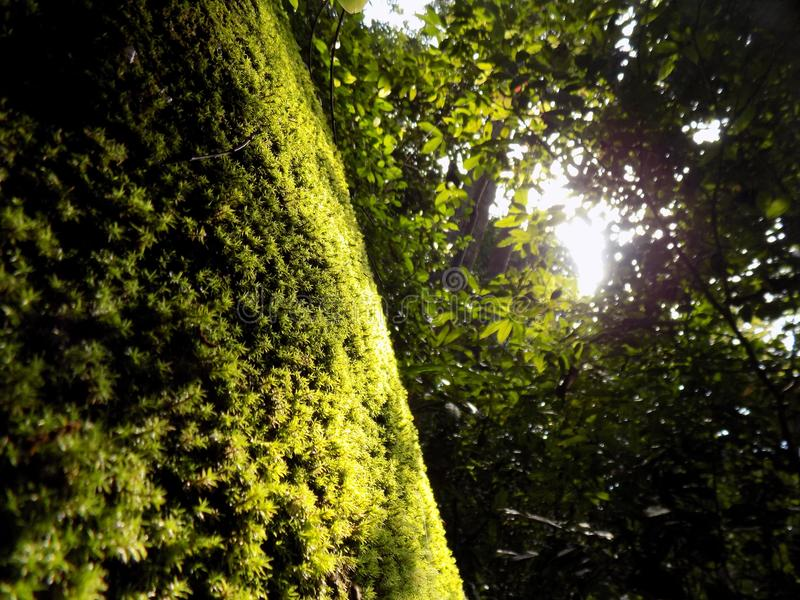 Green florest Jungle. Green on jungle or florest make us more cool and enjoy royalty free stock images