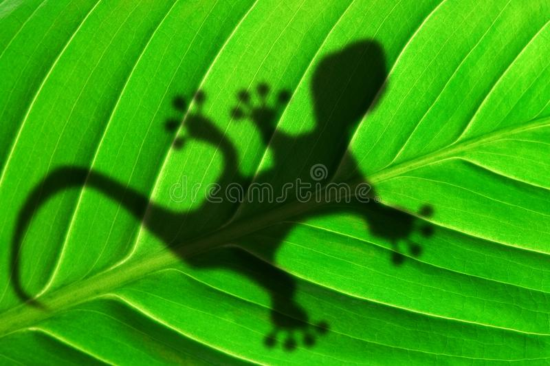 Green jungle leaf and gecko. Green jungle leaf with gecko shadow showing rainforest or nature concept royalty free stock images