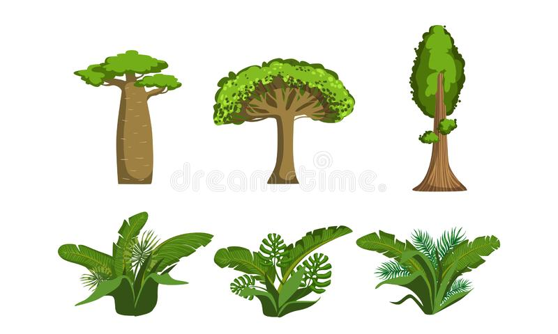 Green Jungle Trees and Palms Set, Tropical Forest Plants Vector Illustration. On White Background vector illustration