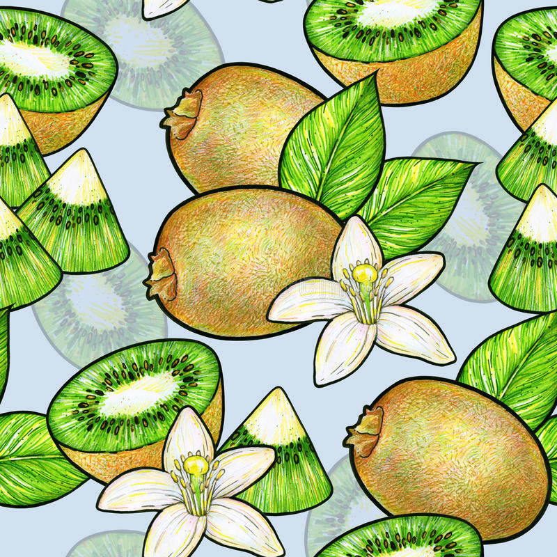 Green kiwi fruit and white flowers with green leaves isolated on blue background. Kiwi animation doodle drawing hand work. stock illustration