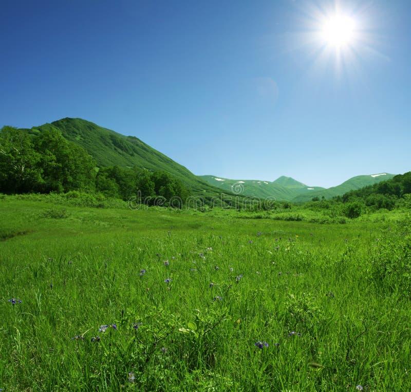 green kullar arkivbilder