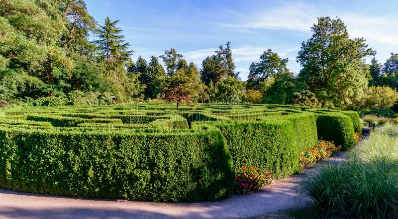 Green labyrinth of bushes in the park of the city`s botanical ga royalty free stock image