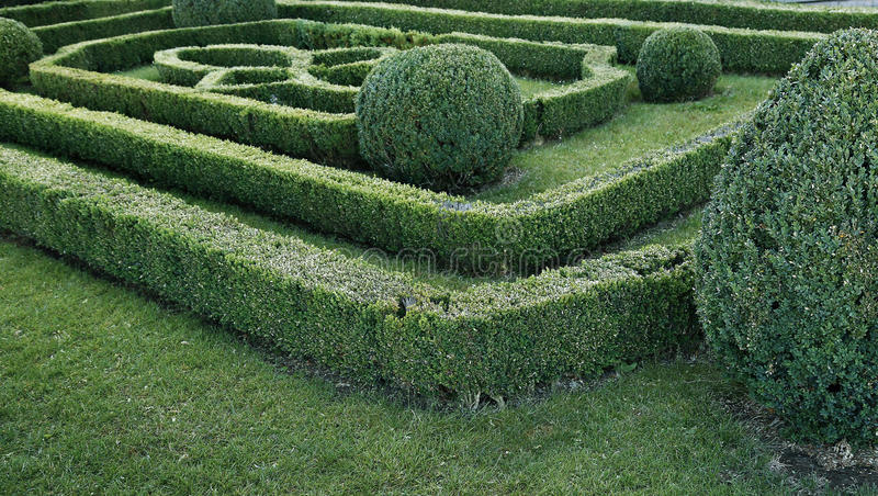 Green labyrinth of trimmed boxwood bushes stock photos