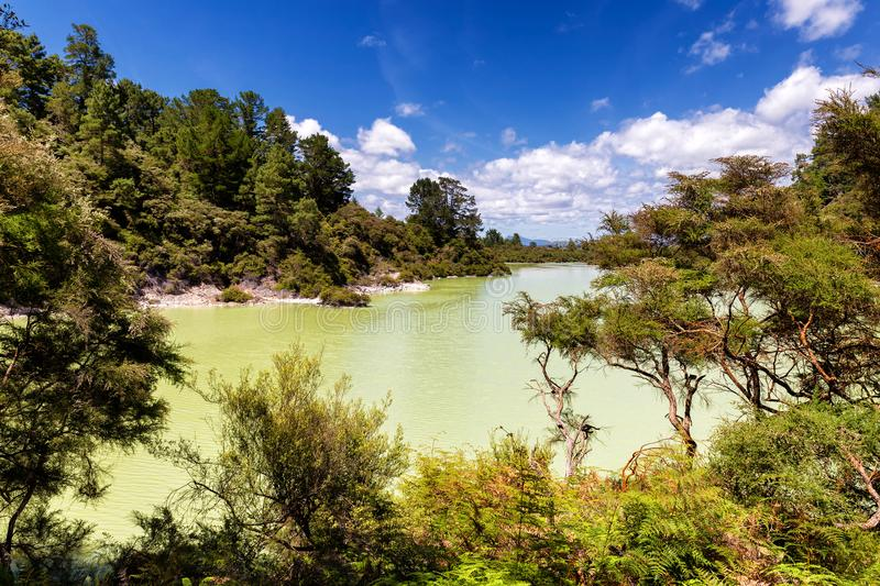 Green lake view in Wai-o-Tapu thermal wonderland park, New Zealand royalty free stock images