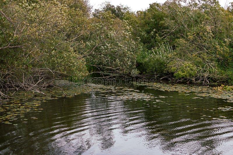 Lake water rippling towards the foliage covered shore. Green lake water rippling towards the foliage covered shore royalty free stock photo