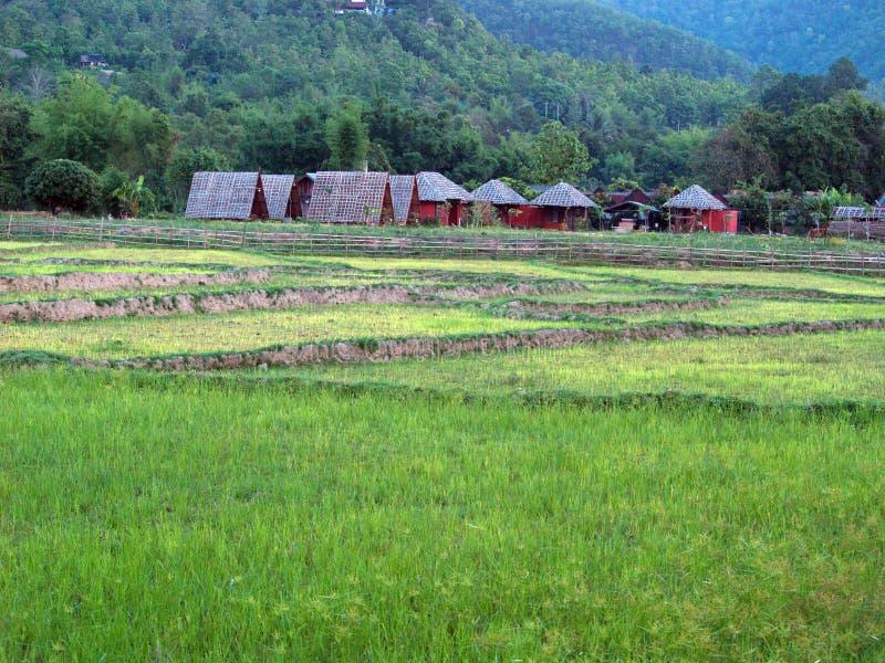 Green land, brown huts stock photo