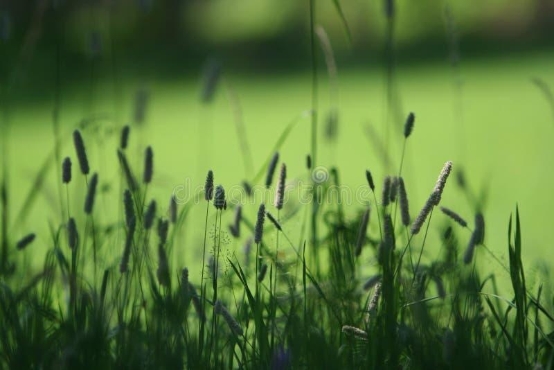 Green landscape stock photos