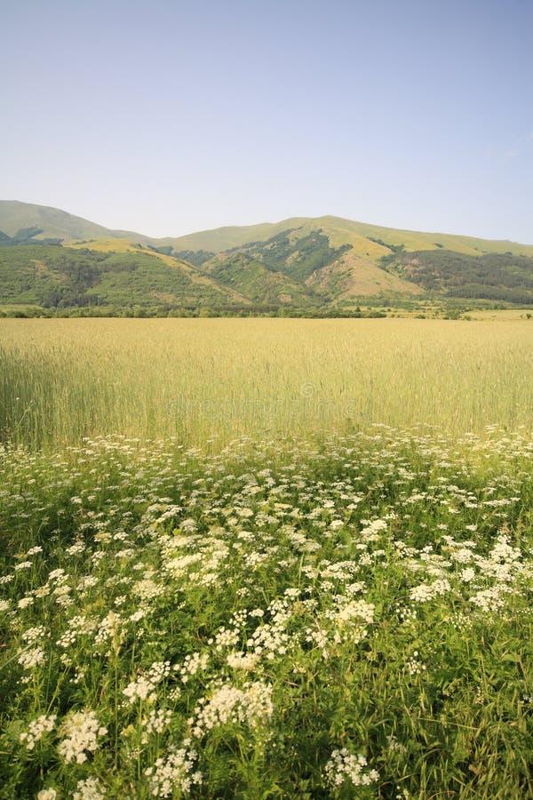 Green landscape stock photo