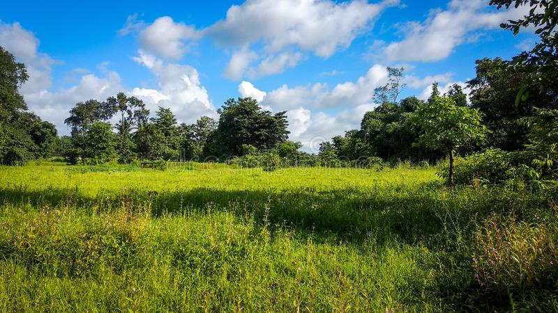 Green Landscape Nature with blue sky and clouds. Landscape in green nature. , grass, greenary, natural, cloud, sky, blue, trees, , clouds, skyand, skyandclouds royalty free stock photography