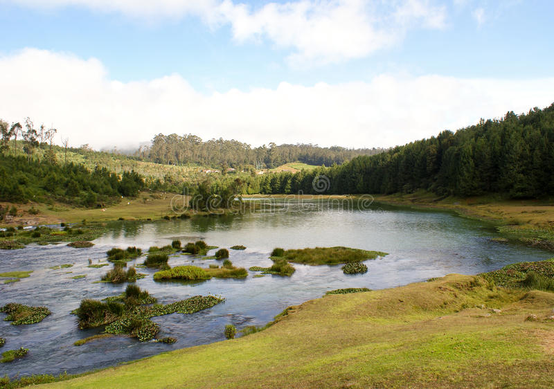 Green landscape with water stream royalty free stock images
