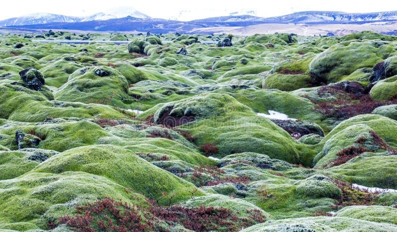 Green lava fields royalty free stock image