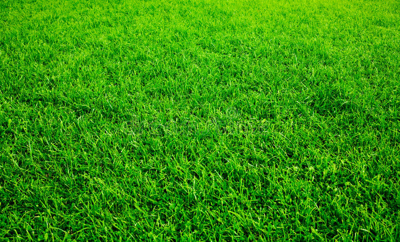 Green lawn royalty free stock image