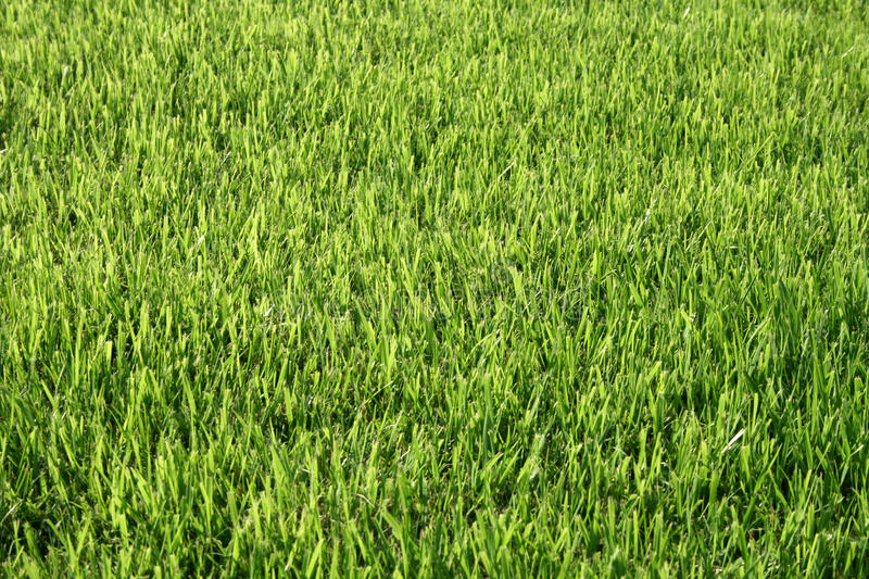Download Green lawn stock image. Image of back, foliage, growth - 12580355
