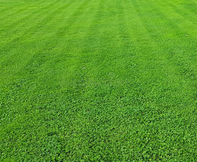Green lawn background. Bright green color. Well-kept lawn. Beautiful well-kept lawn. Texture of grass. Useful as background stock photography