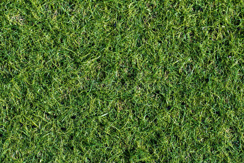 Green lawn for background. Green grass background texture. top v. Iew royalty free stock photos