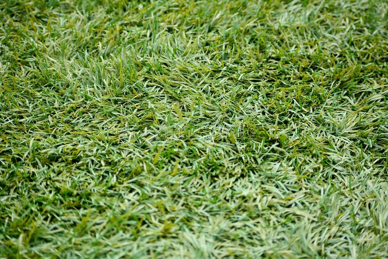 Backyard for background. Green lawn, Backyard for background, Grass texture stock images