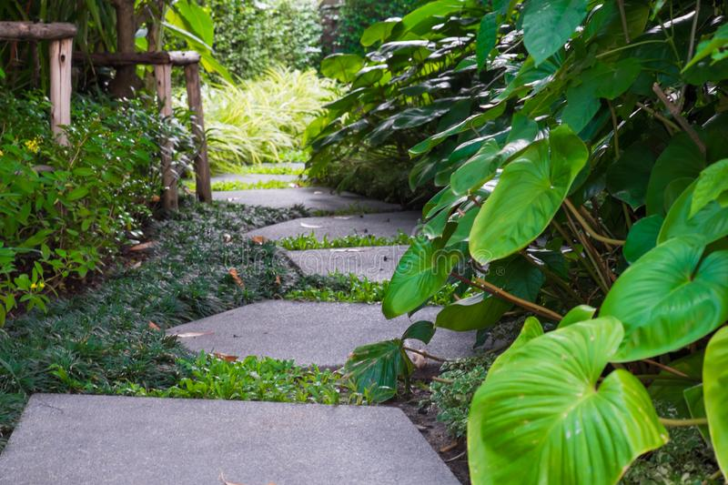 Green lawn, Beautiful stepping stone pathway with green lawn,walkway in the garden, garden landscape design stock image
