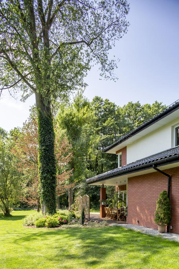 Green lawn and big tree in a garden next to a house. Real photo stock images