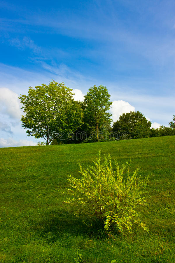 Green lawn with bush royalty free stock images