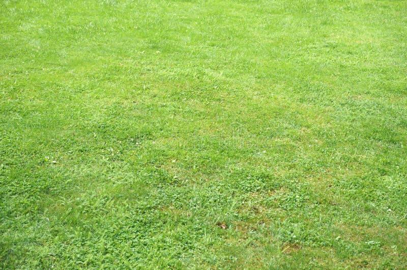 Green lawn royalty free stock photos