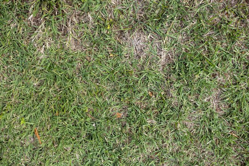 The green lawn, freshly background texture stock images