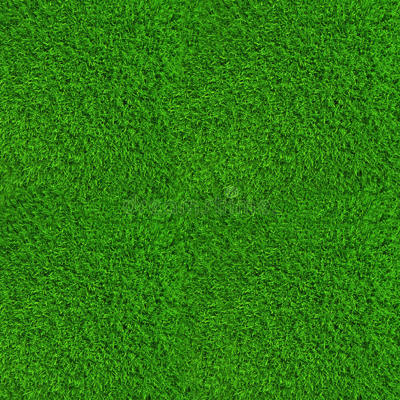 Green lawn grass background texture high. Resolution royalty free stock image