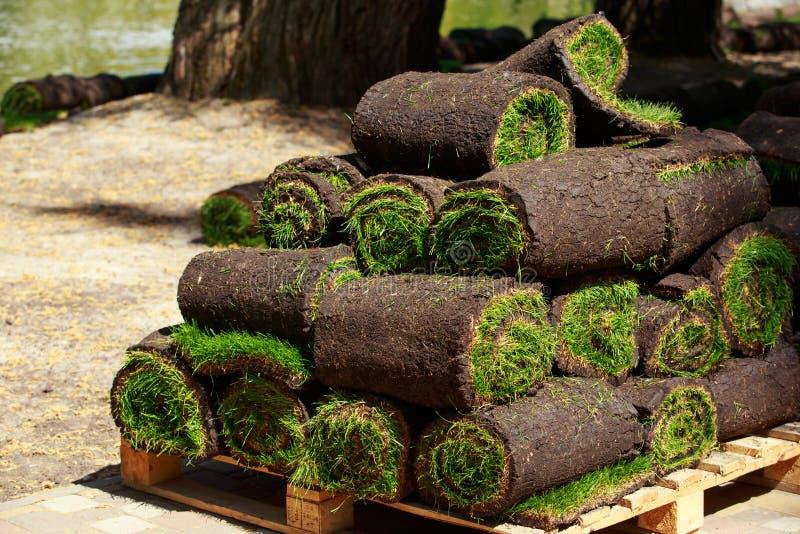 Green lawn grass in rolls stock photos