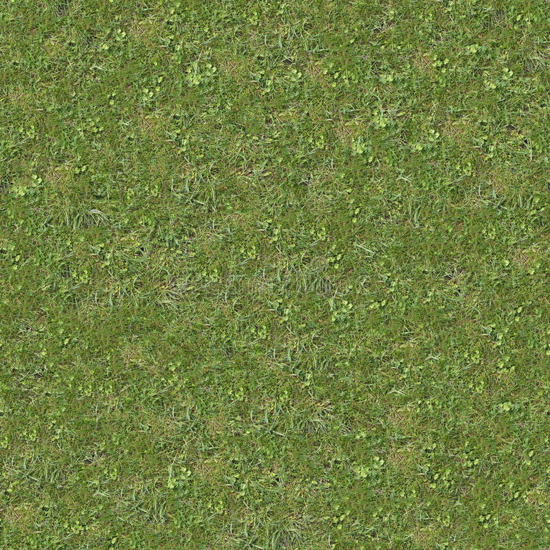 Green Lawn Grass. Seamless Texture. Green Spring Lawn Grass. Seamless Tileable Texture royalty free stock image
