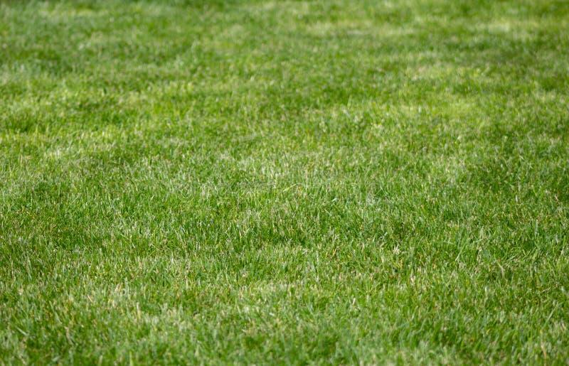 Garden lawn grass texture background. Green lawn grass texture background stock photos