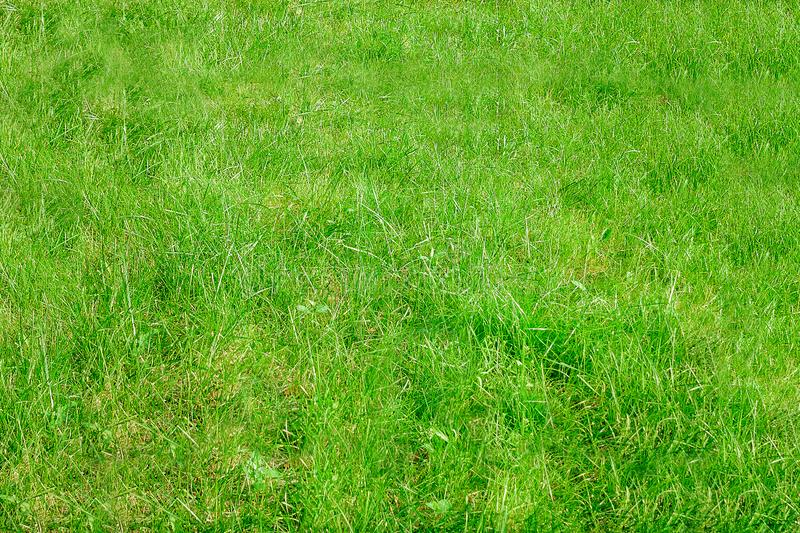 Green lawn, grass texture. Natural summer background stock image