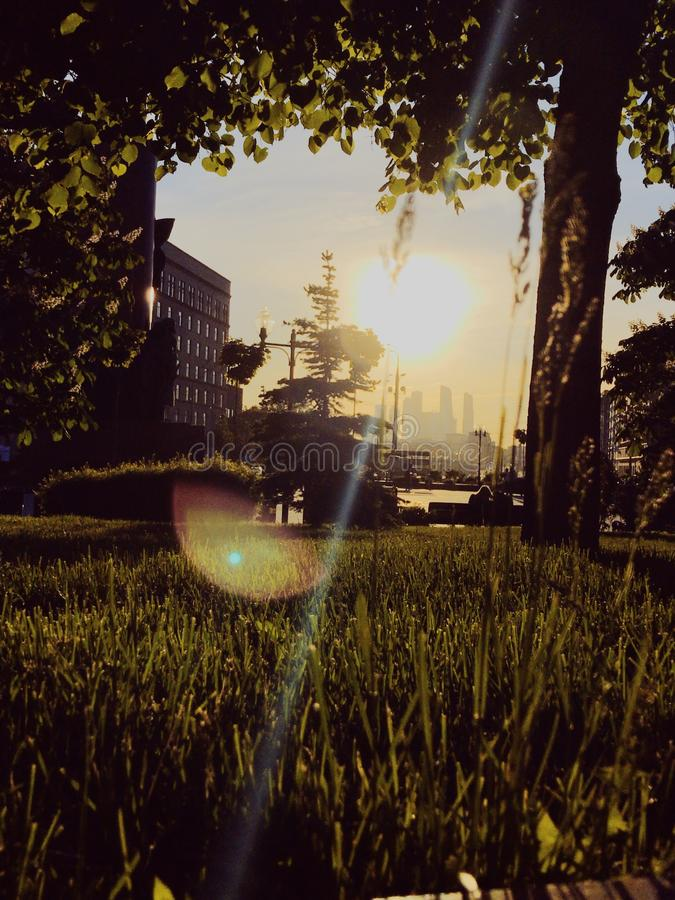 Green lawn in Moscow. Sunset on the green lawn in Moscow. Sun shines in camera lens. Trees and grass are green. Moscow city is on the background stock photos