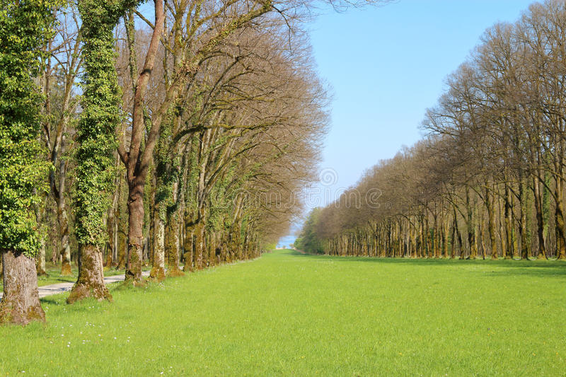 Green lawn in old park in the spring. royalty free stock photo