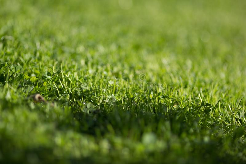 Green lawn pattern royalty free stock photography