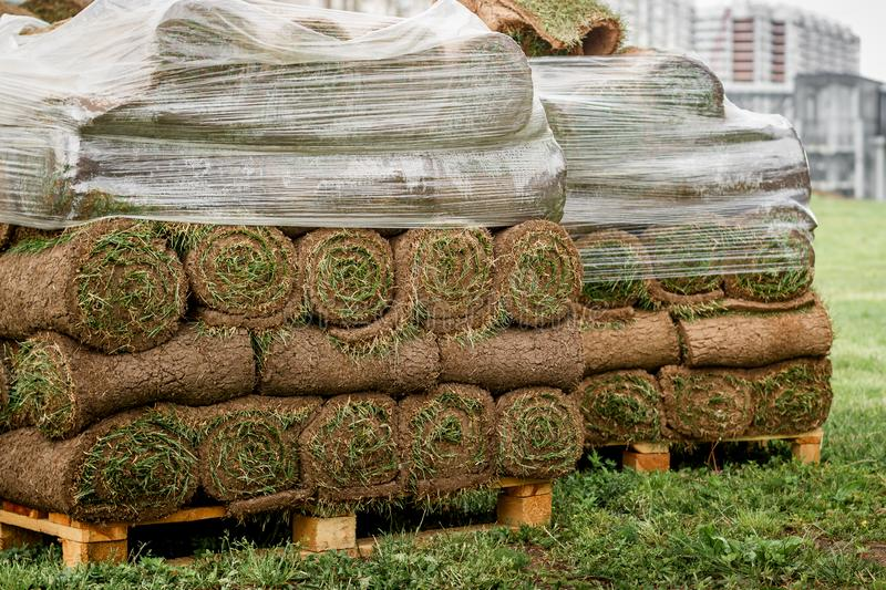 Green lawn in a roll on pallets stock image