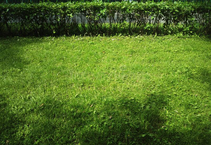 Green lawn surrounded by shadows background royalty free stock photo